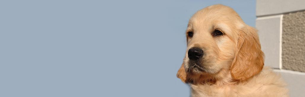 Bushbane Header image for Bushbane Puppies