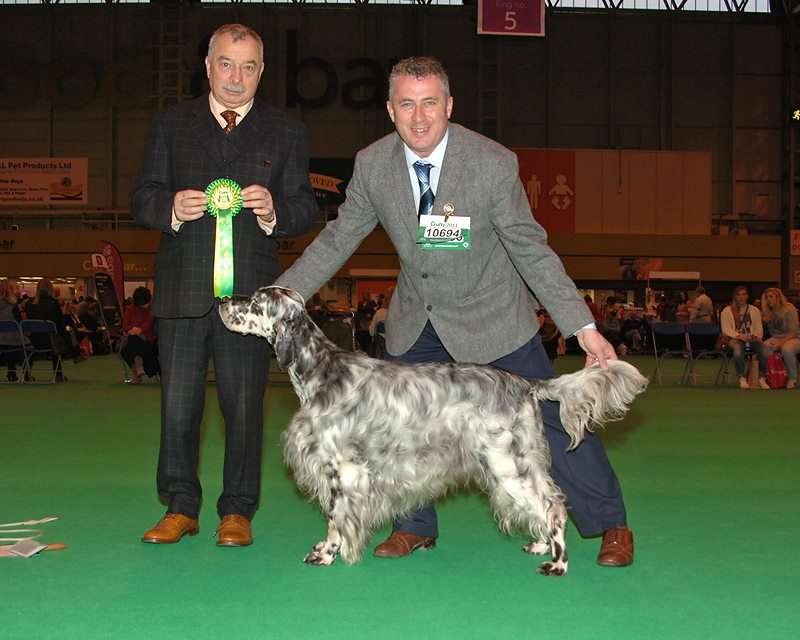 IR, GB & Int Sh Ch Richecca Reach For The Syke - Dog CC Crufts 2013